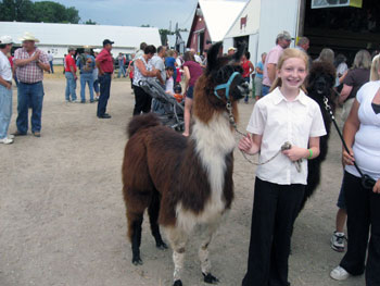 4-H Shows Oberon of Gemini Mini Llamas at 2008 Goodhue County Fair
