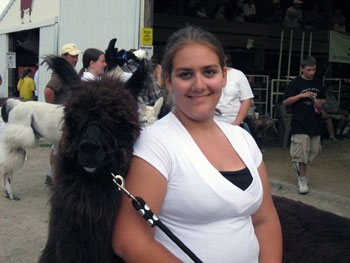 4-H Shows Ares of Gemini Mini Llamas at 2008 Goodhue County Fair